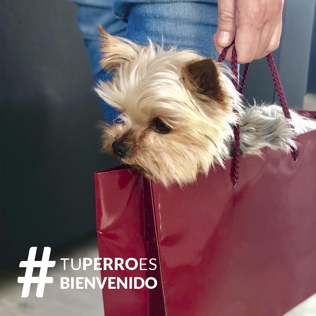 Tu perro es bienvenido el proyecto que intenta hacer Zaragoza más inclusivo con las mascotas haciendo una lista de los comercios que permiten la entrada de animales